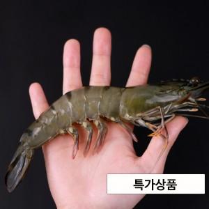 블랙타이거(홍다리얼룩새우) 500g -8미